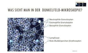 Immunzellen lebendig