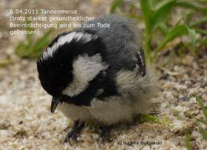 Vogel krank