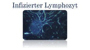 Infizierter Lymphozyt